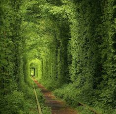 Tunnel of Love - Туннель Кохання Photo courtesy of Canon Photography, Amazing Photography, Nature Photography, Places Around The World, Travel Around The World, Around The Worlds, Stone Age Man, Tunnel Of Love, Destinations