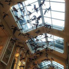 Reposting @kathryn.carmichael.actor: Beautiful art instalation in the historic #burlingtonarcade #art #birds #nature #wingsoffreedom #London #city #beauty @kathryn.carmichael.actor @simonjonknight