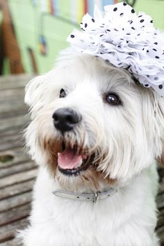 Melboure Cup and #fashiononthefields Check out all the fashionable dogs!