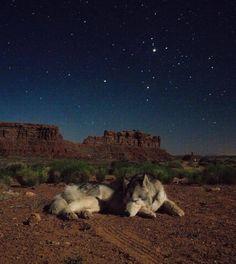 Sweet dreams  . . #pawstruckcritters #weeklyfluffballs #dog_features #retrieversgram #worldoflabs #lablifedogoftheweek #pawsandpaws #bestwoof #myilypet #lacyandpaws #dog #puppy #cute #smile #happy #fuzzfix #love #likeforlike #puppyeyes #love #photo #funny #smiling #photography #photographer #travel #wanderlust #desert #camping #outdoors by fuzzfix