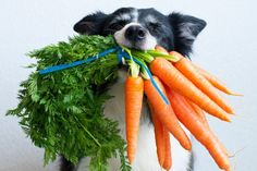 Dog Health Tips, Dog Health Care, Dog Biscuit Recipes, Dog Food Recipes, Deep Art, Diabetic Dog, Dog Biscuits, Dog Eating, Training Your Dog