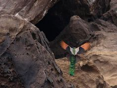 Animal Sanctuaries in Madhya Pradesh, India @ Sanctuariesindia.com