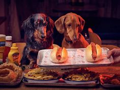 Hot dawg! Meat Liquor is launching a dog-themed food and drink menu