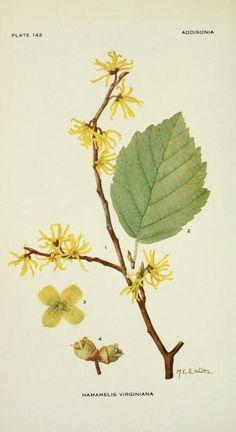 New vintage drawing illustration botanical prints ideas