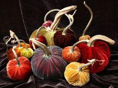 Hot skwash - velvet pumpkins