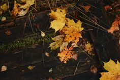 leaves in autumn...