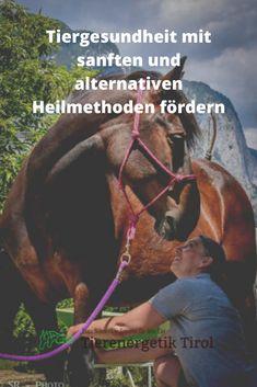 Tiergesundheit durch sanfte Anwendungen der alternativen Heilmethode Alternative Heilmethoden, Horses, Animals, Immune System, Health, Animales, Animaux, Animal, Animais