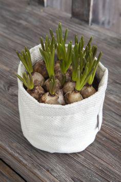 Løkblomster paser fint i grow-in selvvanningsbag: http://www.mestergronn.no/blogg/grow-in-potter-i-nye-farger/