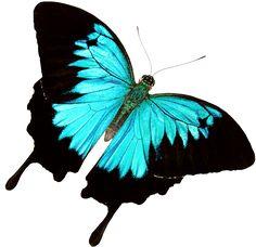 Butterfly World – Where butterflies take flight!