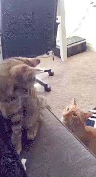 Vicious Attack Wow -cats can be so mean to each other. Maybe it's just called play.  Hhmmm