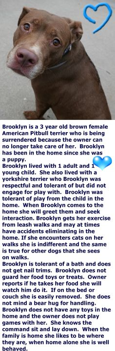 Brooklyn Center BROOKLYN – A1061236 **SAFER: EXPERIENCED HOME** FEMALE, BROWN, AM PIT BULL TER MIX, 3 yrs OWNER SUR – EVALUATE, NO HOLD Reason PERS PROB Intake condition UNSPECIFIE Intake Date 12/22/2015 http://nycdogs.urgentpodr.org/brooklyn-a1061236/