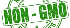 ESCOCIA PROHÍBE LOS CULTIVOS GENÉTICAMENTE MODIFICADOS [GMO] | #Salud #Noticias #Actualidad #Alimentación #Ecología #Health #Ecology | http://www.lagranepoca.com/internacionales/europa/15072-escocia-prohibe-transgenicos-en-favor-de-lo-natural.html