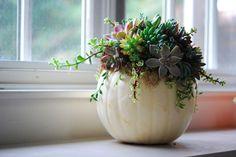 Pumpkins & Succulents Workshop, Specials, Open Days and More!