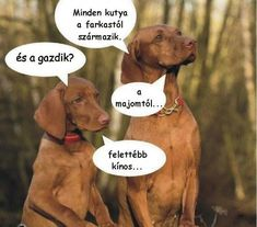Hahaha Hahaha, Vizsla, Mountain Dogs, Cool Pets, Mixed Breed, Funny Pins, Dog Breeds, Have Fun, Funny Pictures