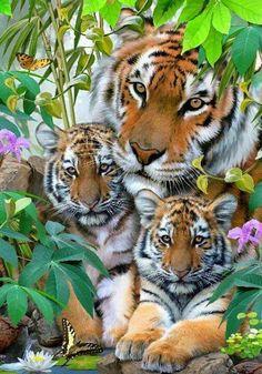 tigerlove