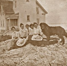 Milo- heroic Newfoundland from Nahant Historical Images, Historical Society, St Bernard Mix, Animal Painter, Water Rescue, Giant Dogs, Kinds Of Dogs, Mountain Dogs, Newfoundland