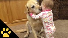 Cute Dogs And Adorable Babies: Compilation - Cute Puppies Videos Funny Babies, Funny Dogs, Cute Babies, Baby Animals, Funny Animals, Cute Animals, Psy Gangnam Style, Cute Dogs Images, Amor Animal