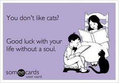 life without a soul if you don't like cats