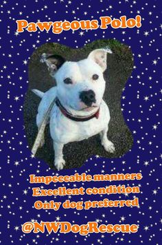 #DangerousDogs I don't think so, this boy @NWDogRescue has impeccable manners, more than a lot of kids have! RT? TY x pic.twitter.com/D2aTtudhzL