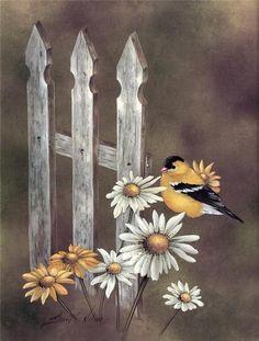 Oiseaux                                                                                                                                                                                 Plus