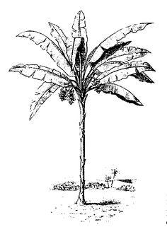 Santa Marta, Sierra Nevada, Tree Sketches, Nature Journal, Ink Illustrations, Drawing Tutorials, Sketchbooks, Logo Inspiration, Line Art