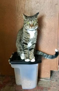 Please spread the word! Mowgley was last seen in Andover, CT Nearest Address: Bunker Hill Road, Andover, CT, United States Found Cat, Bunker Hill, Flea And Tick, Losing A Pet, Fleas, Your Dog, Lost Pets, Cats, 1 Year