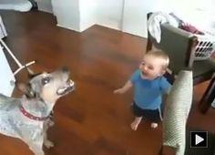 Baby laughing hard at Dog bursting bubbles!!