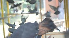 Grimms Tauben: Taubenmärchen von Jan-Uwe Fitz: am 21.9.2013 jagt er Tauben und Geschichten im Babylon, Berlin für uns. Live gucken im Youtube-Stream, kommentieren auf Twitter :-)