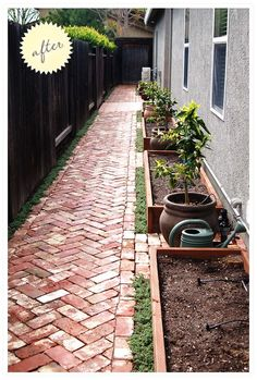 Side yard: herringbone path, container citrus, raised vegetable beds
