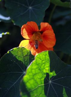 Insects love the herbspiral