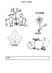 1st grade, 2nd grade, Kindergarten Science Worksheets