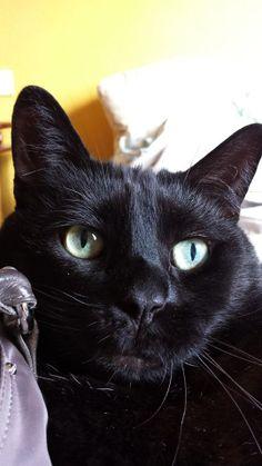 Delphine Lagoguet Pitchounn mon frère chat ma #PerleNoire