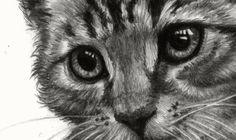 Kitten original pencil drawing van DrawingIllustration op Etsy, Ft21500.00