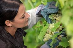 What do #SkinCare and grapes have in common? Did you know grapeseeds contains #antioxidants? http://business.financialpost.com/personal-finance/managing-wealth/grapes-from-her-parents-bordeaux-vineyard-the-inspiration-and-source-for-luxury-skin-care-company