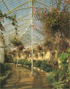 Inside Syon Park Conservatory