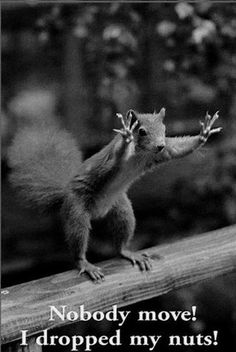 Go Nuts It's Friday!!