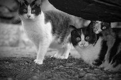 wild cats, mallorca