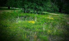 Dönche,Naturschutzgebiet