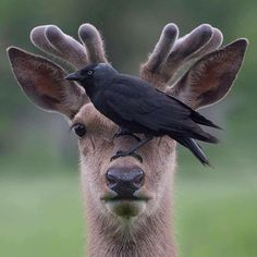 Nature Animals, Animals And Pets, Baby Animals, Funny Animals, Cute Animals, Wildlife Nature, Amor Animal, Mundo Animal, Beautiful Birds