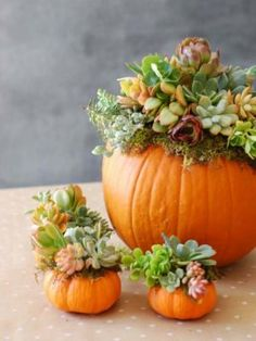 34 Pumpkin Decorations For Fall - Pumpkin Succulent Harvest Decoration - Easy DIY Pumpkin Decor Ideas for Home, Yard, Outdoors - Cool Pumpkin Decorating Ideas for Adults and Kids Party, Creative Crafts With Paint, Glitter and No Carve Projects for Hallowe Pumpkin Centerpieces, Thanksgiving Centerpieces, Centerpiece Ideas, Thanksgiving Ideas, Pumpkin Table Decorations, Pumpkin Arrangements, Diy Thanksgiving Decorations, Succulent Decorations, Fall Table