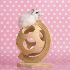 Hamster awesome toy