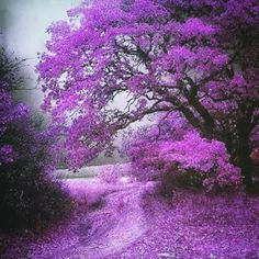 Beautiful tree in purple Beautiful World, Beautiful Places, Stunningly Beautiful, Beautiful Smile, Amazing Places, Wonderful Places, Jolie Photo, Nature Pictures, Amazing Nature