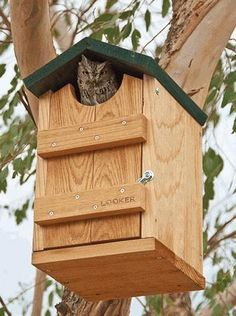 Good looking Owl House accommodates screech and saw-whet owls, even hosts kestrels and flickers. Handcrafted of durable cedar with hunter green roof, it offers ample room for mom and nestlings. Lockin crafts for 10 year olds Screech Owl House Bird House Plans, Bird House Kits, Owl House, Dyi Bird House, Homemade Bird Houses, Bird Houses Diy, Large Bird Houses, Bird House Feeder, Bird Feeders