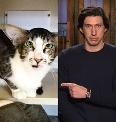 We're all obsessing over this cat who looks suspiciously like Adam Driver