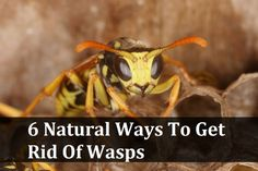 6 Natural Ways To Get Rid Of Wasps
