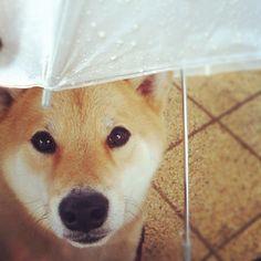 .@Shinjiro Ono | I hate rainy days 雨やだな