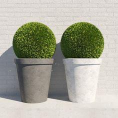 bush in a pot