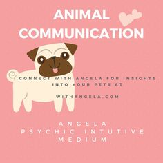 Angela's skills are not limited to just the two legged kind- pets can also be read- with insights and messages into your pets health, likes and dislikes- all from a simple photo! Book a reading with Angela today at withangela.com