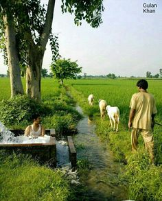 Fantastic photography of Beautiful agricultural land in great Pakistan