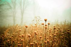 Daybreak in the Meadow Art Print